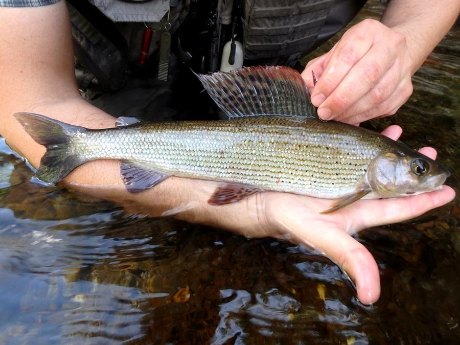 La pêche dans le domaine de Samara de vidéo en été